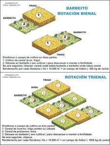 rotacion bienal TRIENAL